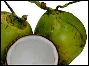 coco verde de brasil copia