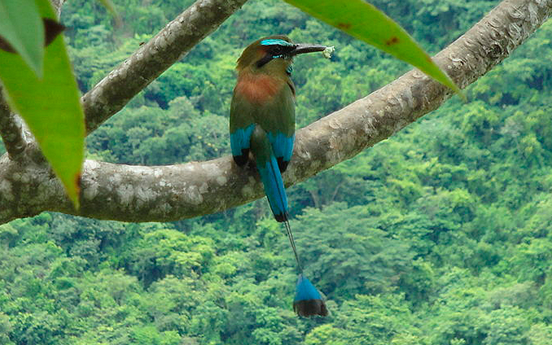 ave-nacional-de-nicaragua
